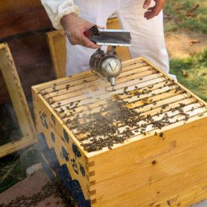 Honig schlecken in Ramersdorf