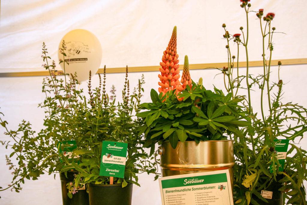 Mehrere Töpfe mit bienenfreundlichen Pflanzen