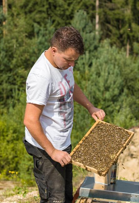 Imker Mathias Müller betrachtet seine Bienen auf einem Rähmchen
